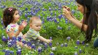 "Marcella Arredondo takes photos of her niece, Thalia Begin, 2, and her son Alec Arredondo, 8 months, in a patch of bluebonnets along Westcott near Prague on Thursday, April 3, 2014, in Houston. Arredondo said she had been trying to take bluebonnet photos of the children for a while, but everywhere she went was too crowded. ""We saw that nobody was there and said, 'This is our chance. Let's go,"" she said."