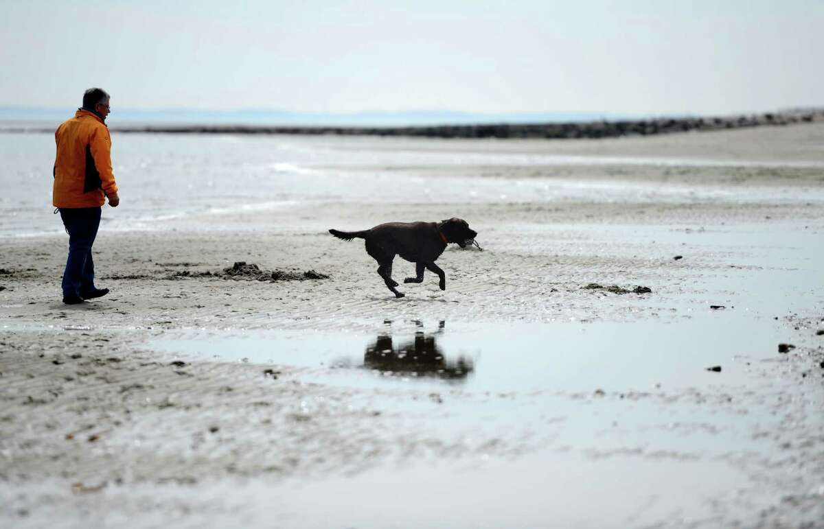 Director of Parks and Recreation for the town of Fairfield Anthony Calabrese said fines for bringing a dog on the beach between April 1 and Sept. 30 are $100, and this beach access is enforced through the town's Animal Control division.