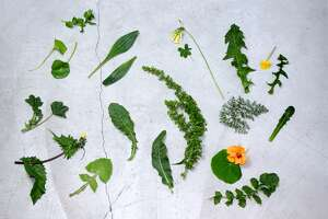 Wild Food Week: Bay Area dinner series showcases foraged plants - Photo