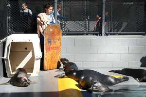 Marine Mammal Center celebrates 40th by saving sea lions - Photo