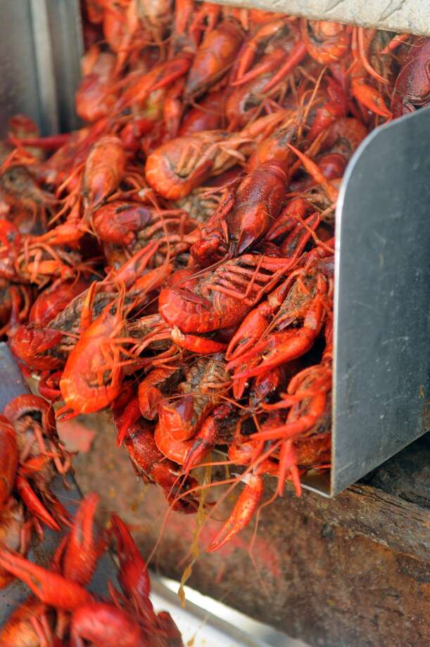 Did you miss the crawfish festivals last weekend in Kemah? More are planned in The Woodlands, Old Town Spring and Pearland. Photo: Jerry Baker, Freelance