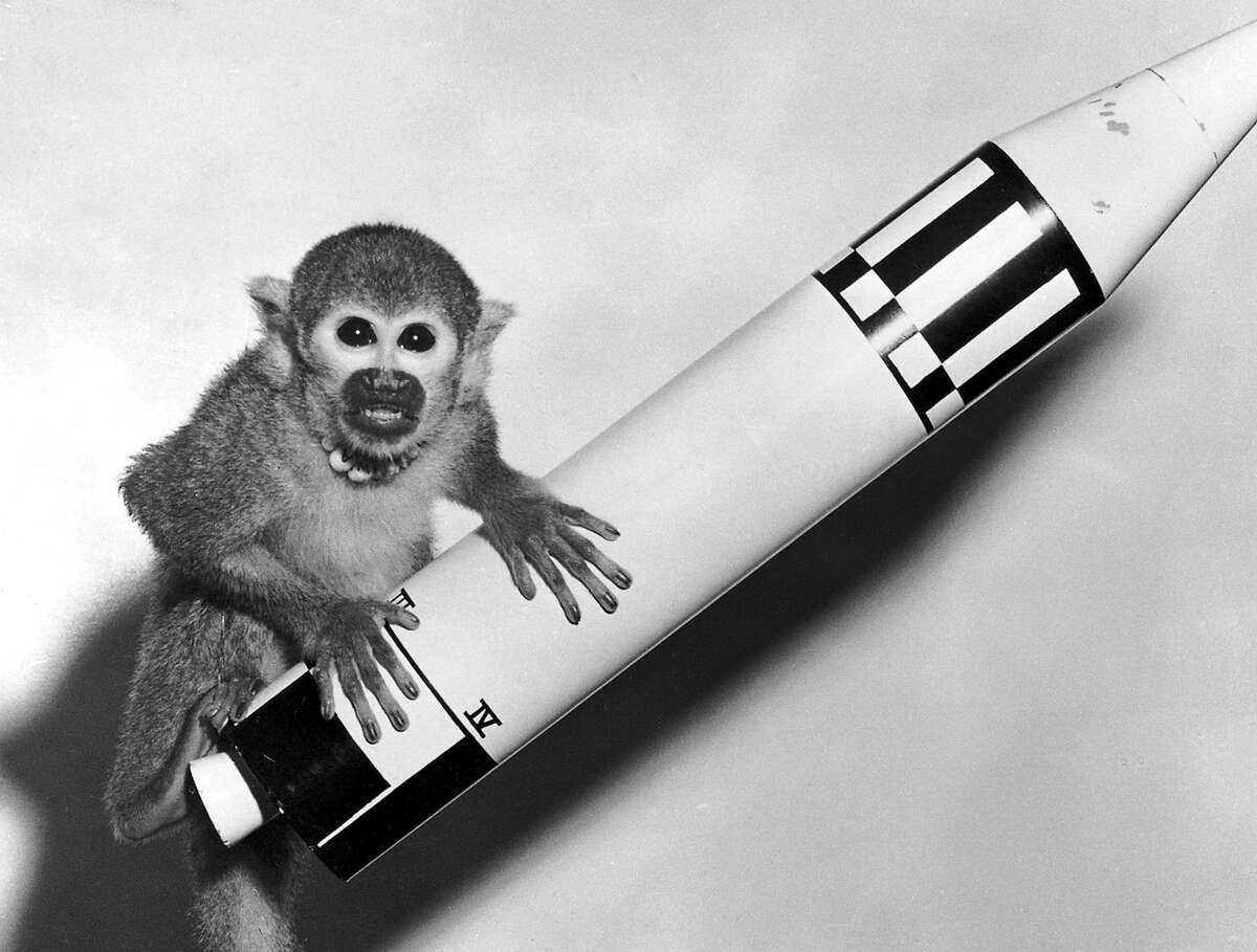 The first monkey to survive space flight was Miss Baker, a Squirrel monkey who rode a Jupiter IRBM into space and back in 1959.