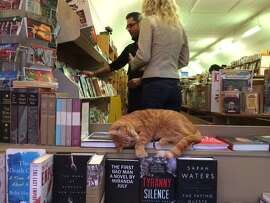 """Aardvark Books, San Francisco: """"We got Owen as a full-grown cat,"""" says store manager David Lugn. """"And we've been saying he's 6 for six or seven years. So his age is up for grabs. In the last year or so, people have been asking if the cat is real. And that's surprising to me. Because yes, the cat is not only real, but alive. This cat is so adored — far more so than anyone working here."""""""