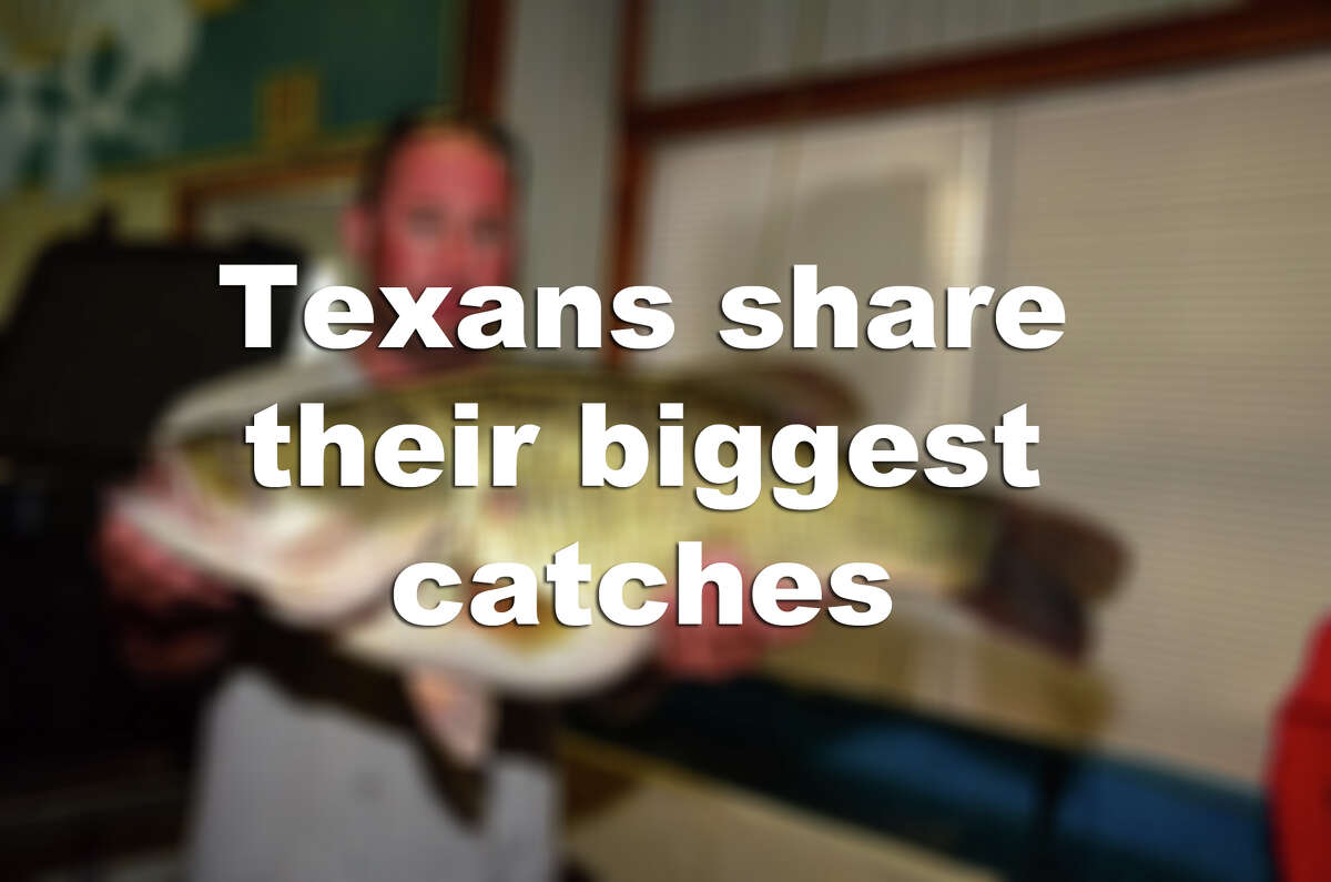 Check out some of the biggest fish to be recently pulled out of Texas waters.