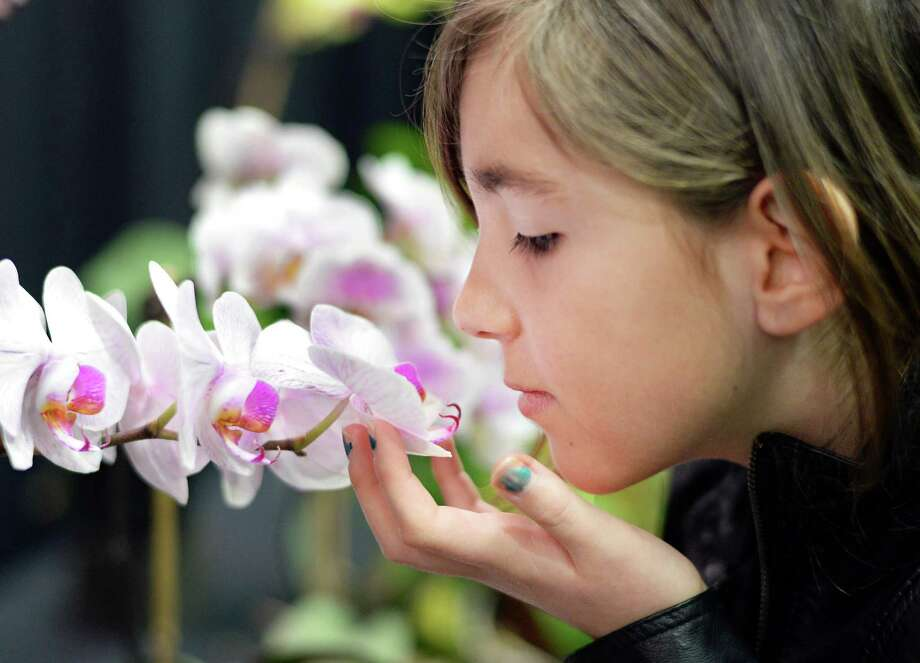Nine-year-old Helena Aviles of Averill Park takes a close-up look at an orchid at the Capital District Garden & Flower Show at HVCC Friday March 27, 2015 in Troy, NY.  (John Carl D'Annibale / Times Union) Photo: John Carl D'Annibale / 00031205A