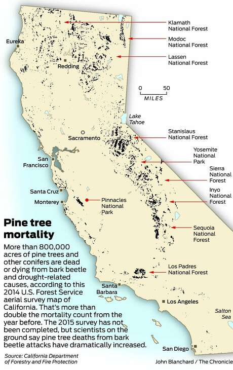 Large Numbers Of Dead Pines Have Been Reported In The Forested Hills Above Clear Lake And In Some Areas Of The Sierra Around Lake Tahoe But It Is South Of