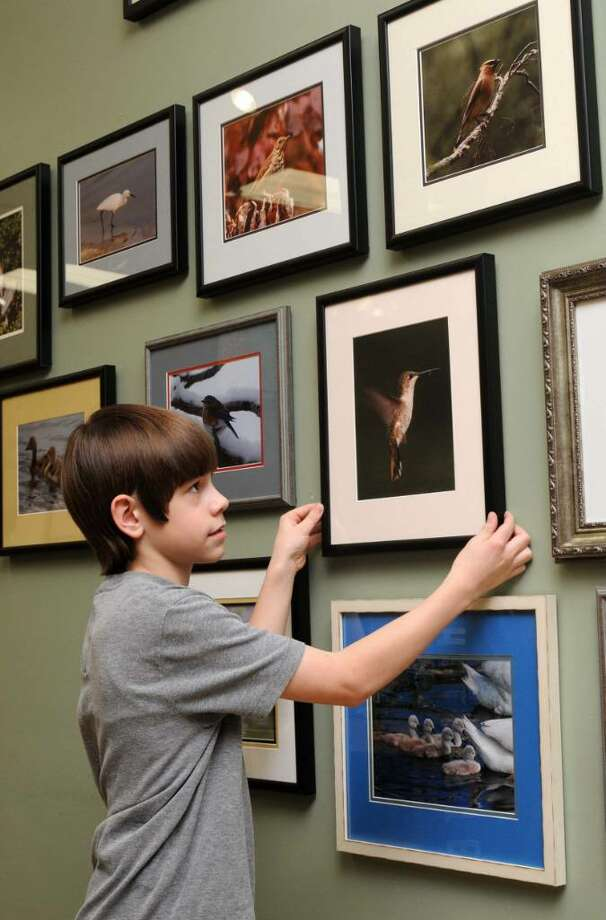 Joey Lounsbury, 13, of Danbury, CT, hangs his photographs of birds for a display at Birds Unlimited, at 317 Federal Rd., Brookfield, CT on Wednesday, March 2, 2010. Photo: Jay Weir / The News-Times