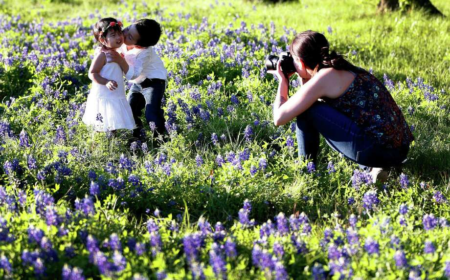 Spring has sprung and love is in the air as Jacob Chuck, 4, gives his 20-month-old sister Alessandra a kiss as they get their photo taken in a patch of bluebonnets along White Oak Bayou. Photo: Karen Warren, Staff / © 2015 Houston Chronicle