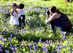 Spring has sprung and love is in the air as Jacob Chuck, 4, gives his 20-month-old sister Alessandra a kiss as they get their photo taken in a patch of bluebonnets along White Oak Bayou.