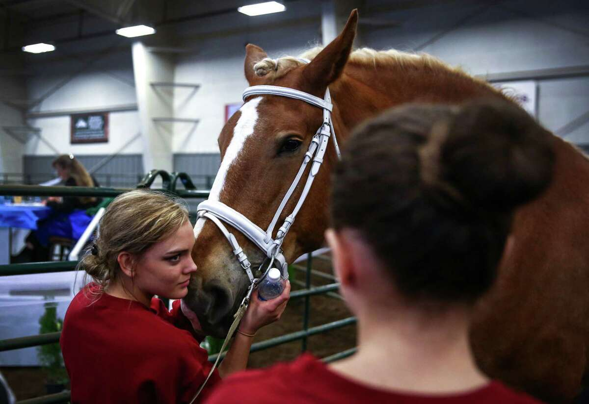 Hadessah Rynning with Above & Beyond Vaulters comforts her horse Curious George before taking the ring during selection trials for the World Equestrian Games and International Vaulting Championships at the Lynden Fairgrounds on Saturday, March 28, 2015. The equestrian sport of vaulting dates back to Roman times when it was used to train cavalry riders for warfare. Modern vaulting is stylized and more similar to gymnastics and dance on the back of a moving horse.
