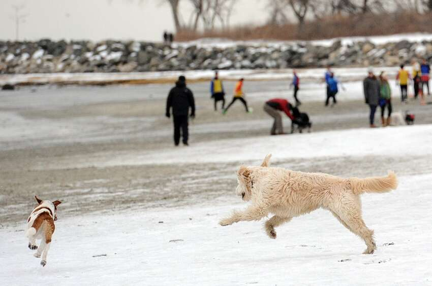 Dogs are kicked off town beaches. Here are some other places you can bring your pups.