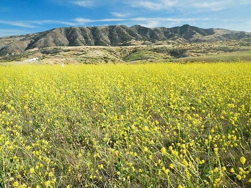 In May, Santa Cruz Island is a sight to be seen as it explodes with wildflowers - a magnificent image, especially when projected against the surrounding Pacific Ocean. The Potato Harbor Trail will take you through fields of yellow mustard flowers (pictured above) and starts at the Scorpion campground.