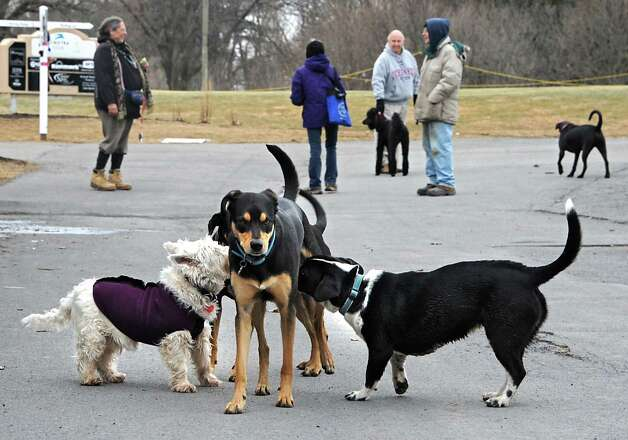 Dog owners chat while a dog gets checked out by other dogs at Capital Hills at Albany golf course on Tuesday, March 31, 2015 in Albany, N.Y. The course is a popular destination for dog owners to walk their dogs.  (Lori Van Buren / Times Union) Photo: Lori Van Buren