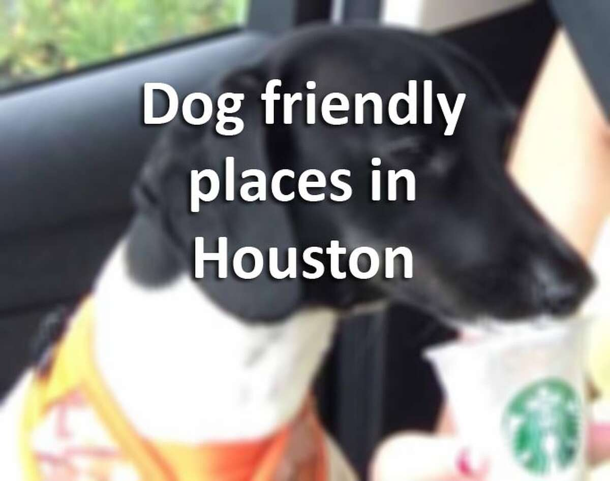 Looking for a fun spot to take your furry friend in Houston? These locations - some locally-owned, some national chains - generally allow pet owners to bring their well-behaved dogs with them. Call ahead to double check for the location near you.