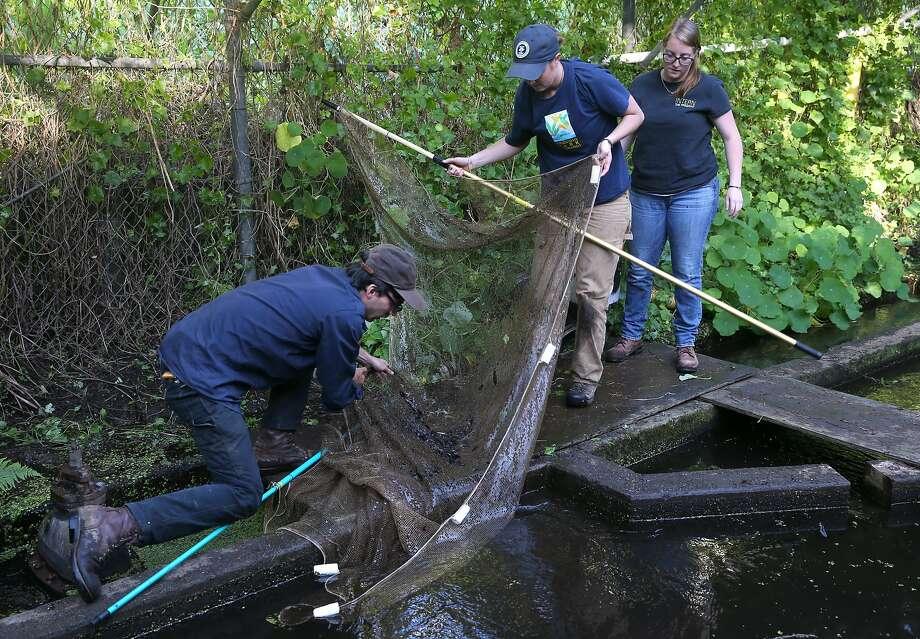 Presidio S Mountain Lake Begins Revival With Native Fish