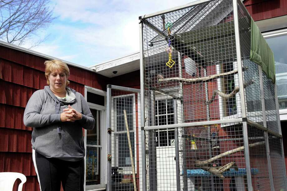 Kim Adam stands in her backyard, near the bird cage from which her pet crow Charlie, escaped when she was moving her. Photo Wednesday, April 1, 2015. Photo: Carol Kaliff / The News-Times