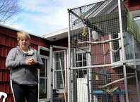 Kim Adam stands in her backyard, near the bird cage from which her pet crow Charlie, escaped when she was moving her. Photo Wednesday, April 1, 2015.