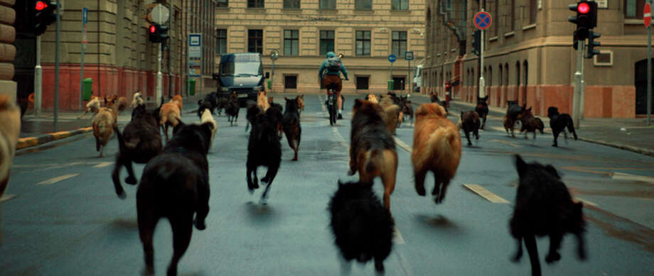 """The dogs take over Budapest in """"White God."""" Photo: Magnolia Pictures / Magnolia Pictures"""