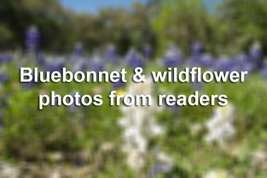 Bluebonnet & wildflower photos from readers