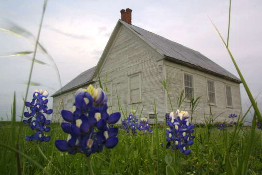 1. You can pick 'em! Just don't overdo itDespite urban legend, picking bluebonnets is not illegal... but picking clumps of the flowers should not be done, according to the Texas Department of Public Safety.  Photo: Joe Raedle, Getty Images / Hulton Archive