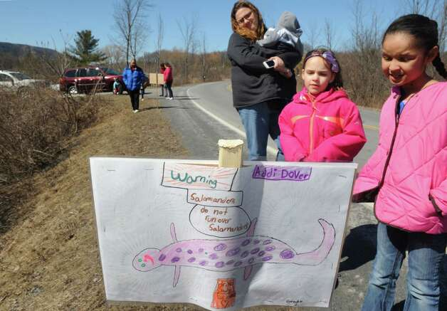 Altamont Elementary School art teacher Trisha Zigrosser had her art students design save our salamander signs placed along Picard Road on Wednesday April 1, 2015 in Altamont, N.Y. (Michael P. Farrell/Times Union) Photo: Michael P. Farrell / 00031244A