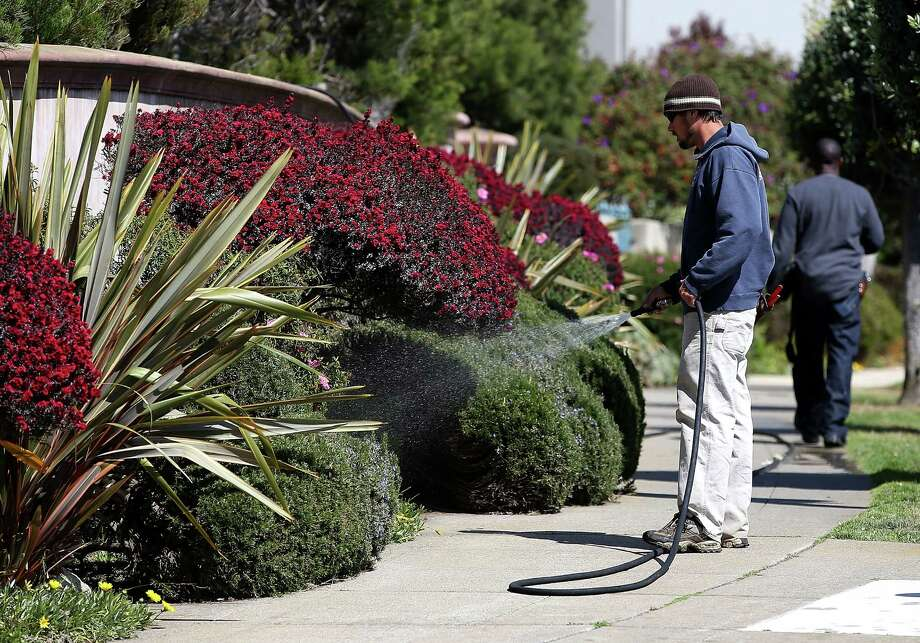 A gardener hoses down plants in San Francisco. With California entering its fourth year of severe the drought and the state's snowpacks at record lows, Gov. Jerry Brown has ordered a statewide 25 percent mandatory water usage reduction for residents, businesses and farms. Photo: Justin Sullivan, Staff / 2015 Getty Images