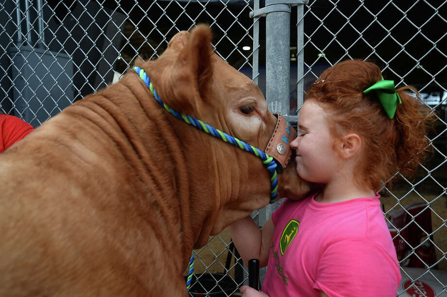 Jillian Gentile, 10, of Winnie gets a snuggle Wednesday from her Five Star show cow Katie after bathing and grooming the animaly outside the 4-H steer barns at the YMBL South Texas State Fair. Jillia and many other 4-H participants are gearing up for the large animal auction on Thursday. Photo: Kim Brent / Beaumont Enterprise