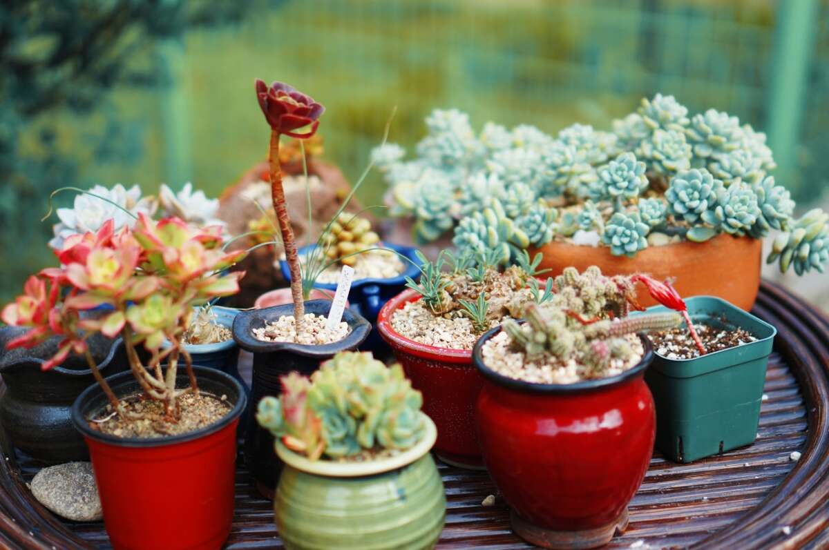 Opt for a garden of drought-tolerant plants, like these colorful potted cacti.