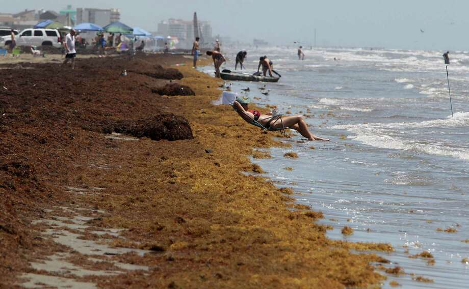 Despite the stink of seaweed along Galveston's beaches last summer, tourism dollars actually rose at $75.28 million. Photo: James Nielsen, Staff / © 2014  Houston Chronicle