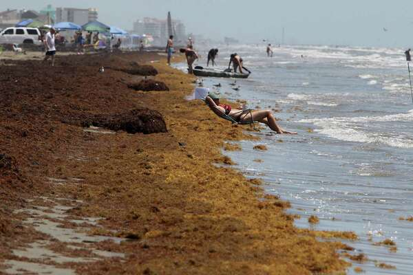 Galveston may be spared from unsightly seaweed this season