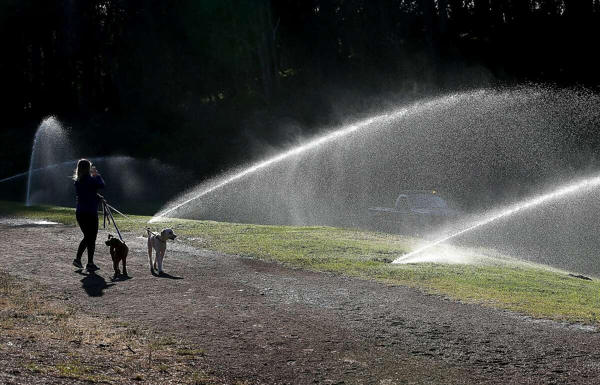 A pedestrian walks her dogs by sprinklers watering the lawn in Golden Gate Park on April 2, 2015 in San Francisco, California. As California enters its fourth year of severe drought and the state's snowpack is at record lows, California Gov. Jerry Brown has ordered a statewide 25 percent mandatory water useage reduction for residents and businesses.