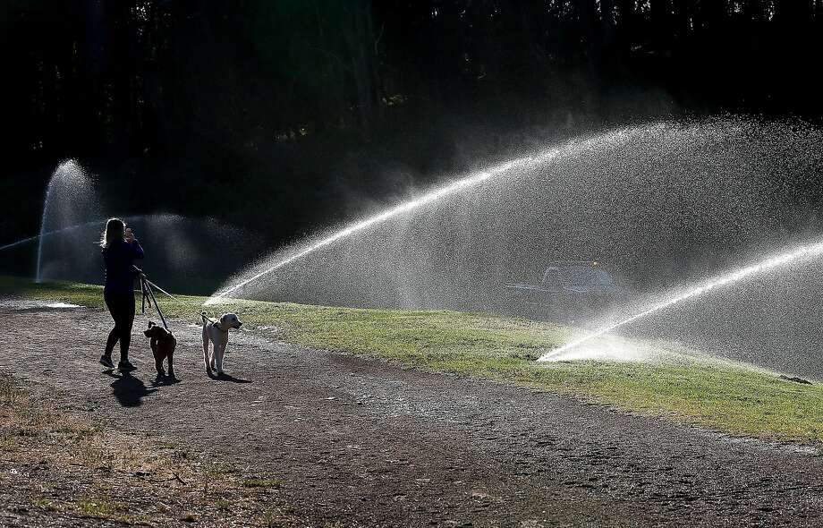 A pedestrian walks her dogs by sprinklers watering the lawn in Golden Gate Park on April 2, 2015 in San Francisco.  California Gov. Jerry Brown has ordered a statewide 25 percent mandatory water useage reduction for residents and businesses. Photo: Justin Sullivan