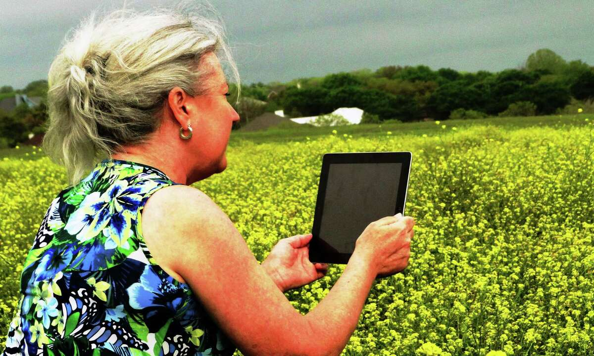 PerriAngela Wickham videos a field of wild mustard, or bastard cabbage, that's swallowed a bluebonnet field.