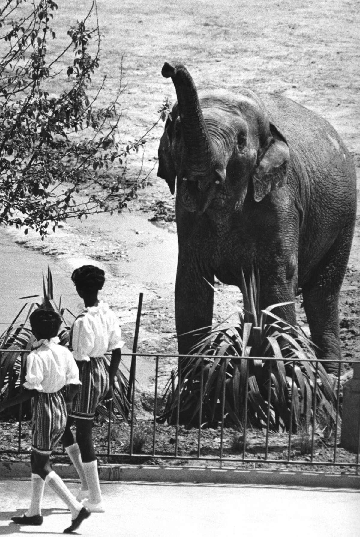 One of the park's elephants greets a couple of preview guests. Sometimes an unexpected shower accompanies the salute. Sam C. Pierson Jr. : Chronicle file. May 30, 1971