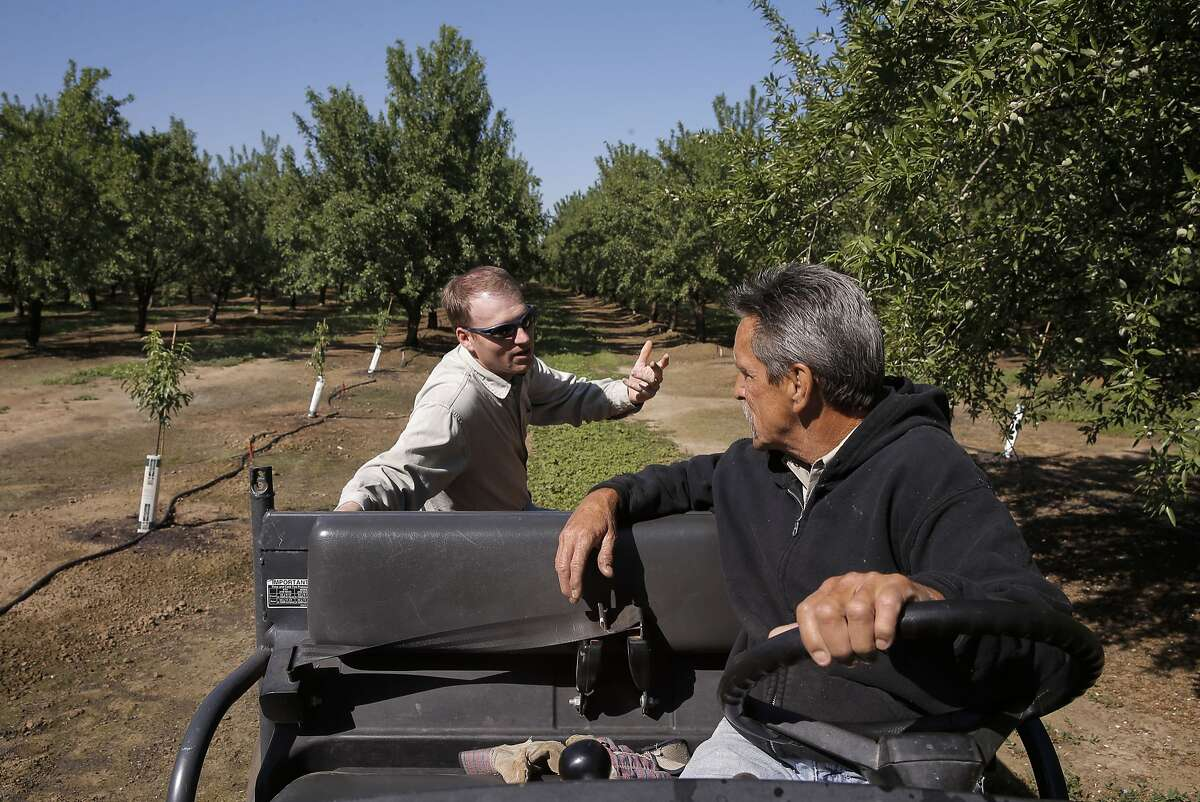 David Doll, (left) a farm advisor with the University of California Cooperative Extension meets with Steve Brewer the orchard manager of Denis Family farms, about the current effect of the drought on his almond trees near Stevinson, Calif, as seen on Fri. April 3, 2015.