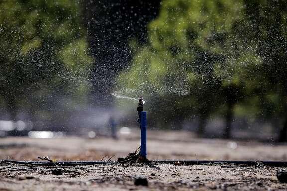 A micro sprinkler irrigates an almond orchard near Hillmar, Calif., as seen on Fri. April 3, 2015.