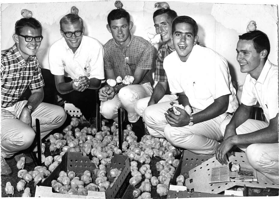 Cal men have chicks on the brain:And this photo from Oct. 9, 1964, proves it. The caption gives no clue why the clean-cut crew posed with 1,000 baby chickens. Photo: John McBride, The Chronicle