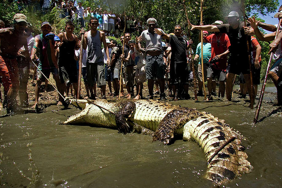 Costa RicaCatholic pop.:3,763,000  La Lagarteada is a Holy Week event in Ortega de Santa Cruz, Guanacaste where people capture a crocodile on Good Friday and release it the next day. Source: Néstor Baltodano on Flickr
