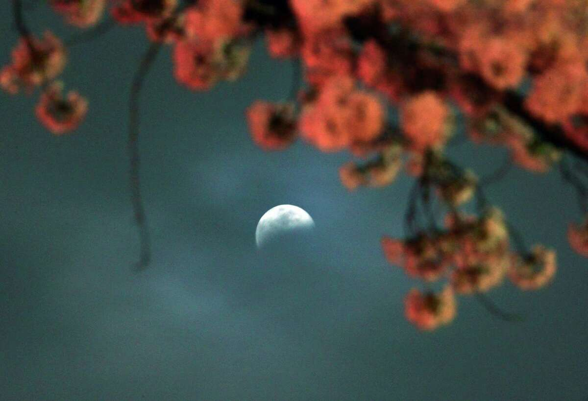 A partial lunar eclipse is seen behind fully bloomed cherry blossoms in Utsunomiya in Tochigi prefecture, 100km north of Tokyo on Saturday. Sky-gazers in part of the Pacific Rim enjoyed an