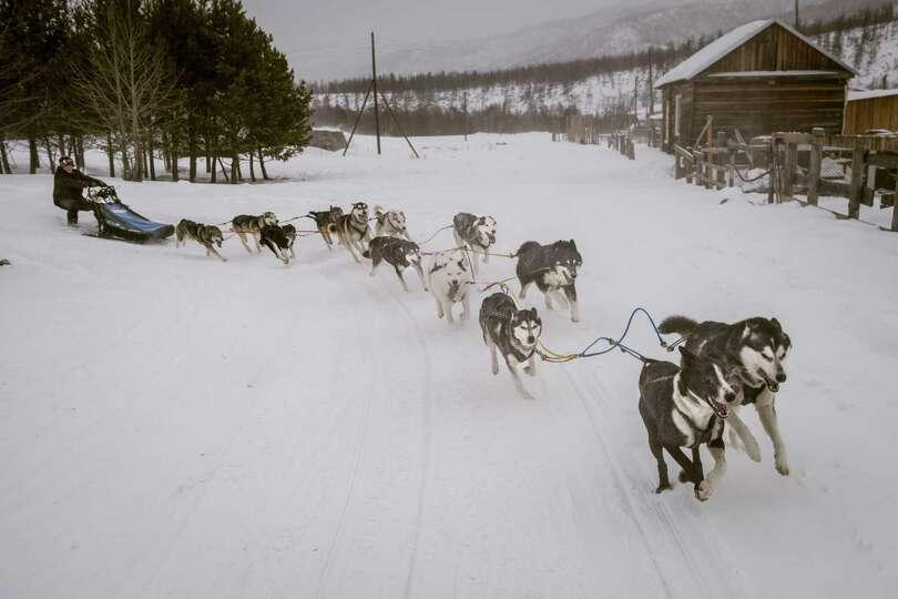 Musher Andrei Semashkin drives his sled through Esso, Russia, last month. The annual Beringia dog sl