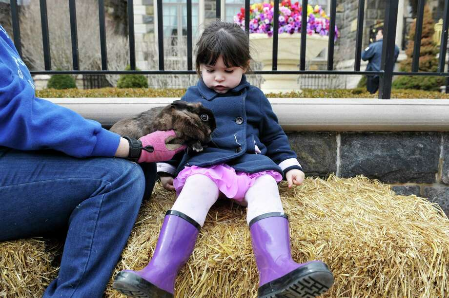 Sophie Millier, 2, of Ballston Spa visits with a rabbit from Dream Ponies and Zoo during an Easter event outside of Michele Riggi's home on Sunday, April 5, 2015, in Saratoga Springs, N.Y.  Attendees were able to get their photo taken with Riggi dressed as Little Bo Peep and other Easter characters and receive a print and a candy bar.   (Paul Buckowski / Times Union) Photo: PAUL BUCKOWSKI / 00031303A