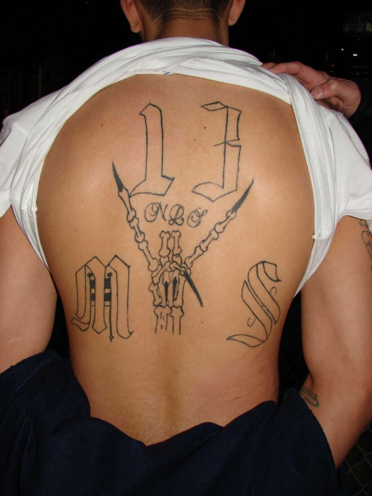2. The MS13 gang began in Los Angeles in the 1980s as a way for immigrants from El Salvador to protect themselves from predators in the immigrant community there. A MS-13 gang member shows his tattoo identifying him as a member of that gang.