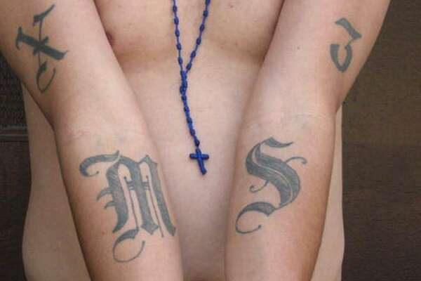 8. MS13 gang members are known to mark their territory with graffiti of the letters MS as well as slogans unique to the gang.   An example of a tattoo of the gang Mara Salvatrucha (MS-13). The Obama administration has labeled a violent Central American street gang as an international criminal organization subject to U.S. government sanctions, the first time this designation was given to such a group.  (AP Photo/Michael Johnson, ICE)