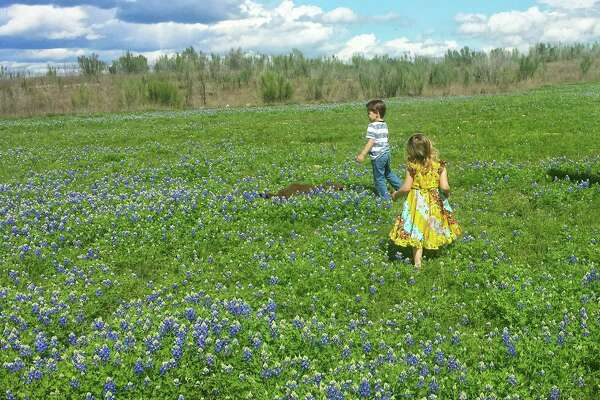 My kids in the bluebonnets near Rolling Oaks Mall. Shared by Meridith Hamar.