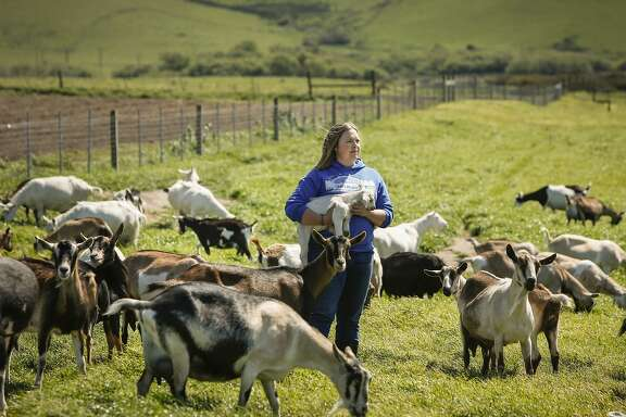 Anna Hancock, owner of Pugs Leap Cheese and White Whale Farm, is seen with some of her goats on Thursday, April 2, 2015 in Petaluma, Calif.