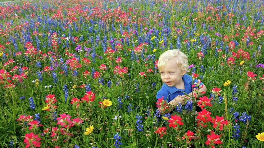 This is a picture of my Great Grandson, Axel Adkinson, sitting in a field of flowers in La Vernia, Texas