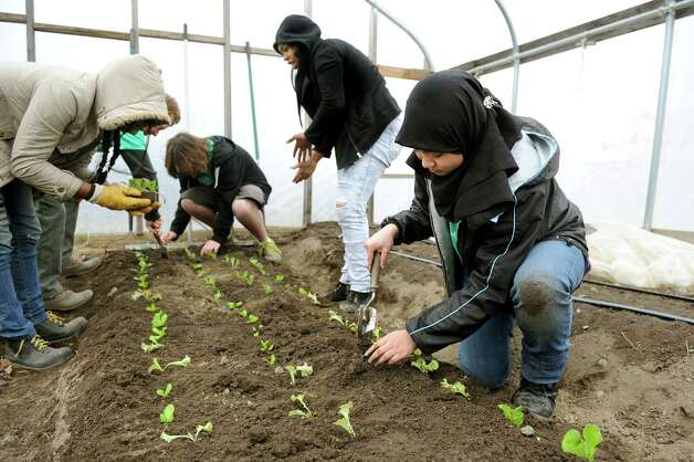 Nabihah Azhari, 17, right, and other teens in the Produce Project plant lettuce in a hoop house on Wednesday, April 8, 2015, at Capital Roots in Troy, N.Y. The Troy High youths work year-round at the urban farm. They grow organic crops and sell them at the farm stand and local markets. (Cindy Schultz / Times Union) Photo: Cindy Schultz / 00031348A