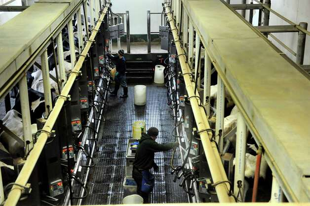 Milking operation on Wednesday, April 8, 2015, at Herrington Farms Inc. in Brunswick, N.Y. Owner Phil Herrington has found an unusual niche for his milk in the kosher market. (Cindy Schultz / Times Union) Photo: Cindy Schultz / 00031344A