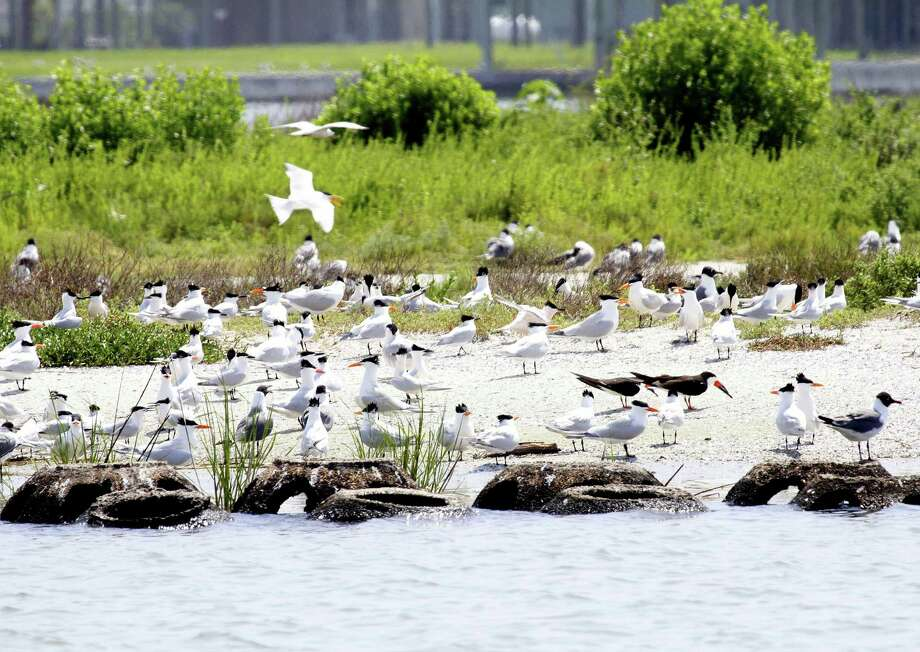 Conservation groups are pushing for Texas to use federal Restore Act funds for significant coastal restoration projects such as this West Galveston Bay project that used dredge spoil to create a nesting island for coastal birds. Photo: Picasa