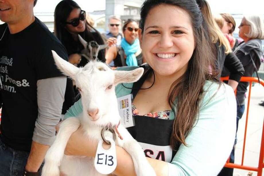 "CUESA's 9th annual Goat Festival — affectionately called ""Goatchella"" — takes place in San Francisco on April 15."